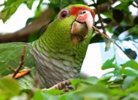 Adoptovali jsme papouška